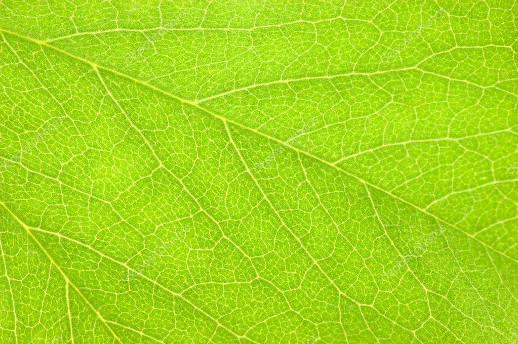 Textura de fondo verde hoja macro foto de stock 10622286 - Color verde hoja ...