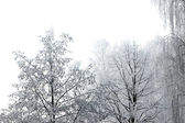 Early Winter Day and New Snow Isolated — Stock Photo