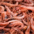 Mediterranean shrimps — Stock Photo