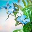Beautiful blue flowers background — Stock Photo