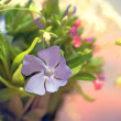 Bunch of beautiful spring flowers — Stock Photo #10469929