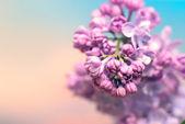 Beautiful lilac flowers on pastel background — Stock Photo