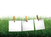Hanging blank paper on clothesline in field — Stock Photo
