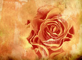 Abstract grunge background avec rose — Photo