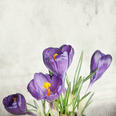 Textured old paper background with beautiful spring flowers — Stock Photo