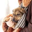 Lovely puppy — Stock Photo #9199883