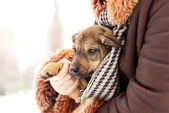 Lovely puppy — Stock Photo