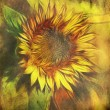 Vintage background with sunflower - Stock Photo