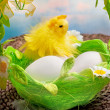 Easter chick and eggs in basket - Stock Photo