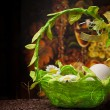 Eggs in green basket over dark - Zdjęcie stockowe