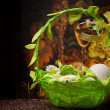 Eggs in green basket over dark - Stockfoto