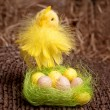 Easter chick and eggs in nest - Stock Photo