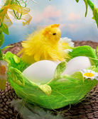 イースターのひよこと卵のバスケットで — ストック写真