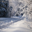Winter forest, trees covered with rime — Stock Photo #7980392