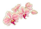 Branch of orchids — Stok Vektör