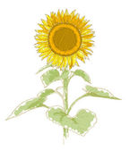 Hand-drawing sunflower — Stock Vector