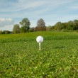 Golf ball on the golf course — Stock Photo