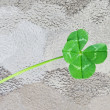 Four leaf clover — Stock Photo #10064640