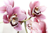 Flower orchid — Stock Photo