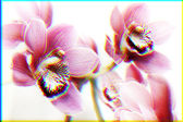 Orchid abstract — Stock Photo