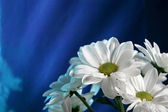 Flower on the shine blue background — Stock Photo