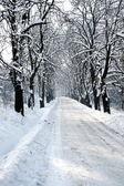 Winter boom hall — Stockfoto