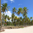 Beachfront in Bahia - Stock Photo