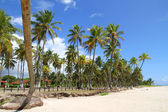 Beachfront in Bahia — Stock Photo