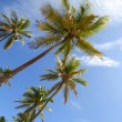 Palm Trees - Stock Photo