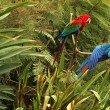 Stock Photo: Parrots in Forest
