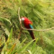 Stock Photo: Parrot in Forest
