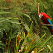 Parrot in the Forest - Stock Photo