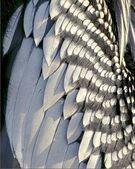 Anhinga feathers close up — Stock Photo