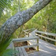 Tropical hardwood Hammock — Stock Photo
