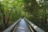 Tropical hardwood Hammock — Stock Photo