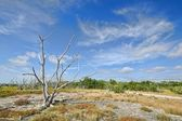 Everglades Coastal Prairies — Stock Photo