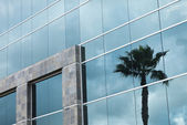 Abstract Corporate Building with Palm Tree Reflection — Fotografia Stock