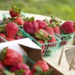 Baskets of Fresh Strawberries — Stock Photo
