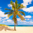 Varadero beach in Cuba — Stock Photo