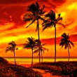 Colorful sunset on a beautiful tropical beach — Stock Photo