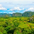 The Valley of Vinales in Cuba, a famous touristic destination — Stock Photo #8481621
