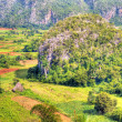 The Valley of Vinales in Cuba, a famous touristic destination — Stock Photo