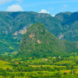 The Valley of Vinales in Cuba, a famous touristic destination — Stock Photo #8481644