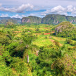The famous Valley of Vinales in Cuba — Stock Photo