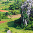 The famous Valley of Vinales in Cuba — Stock Photo #8481655