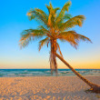 Tropical beach at sunset — Stock Photo #8481960