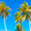 Tropical coconut trees with a clear blue sky background — Stock Photo