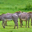Zebras on green savanna — Foto Stock #8482828