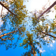 Trees canopy on a beautiful sky background - Stock Photo