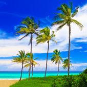 The beautiful beach of Varadero in Cuba — Stock Photo